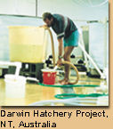 Darwin Hatchery Project